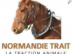 photo de NORMANDIE TRAIT Balade en calèche